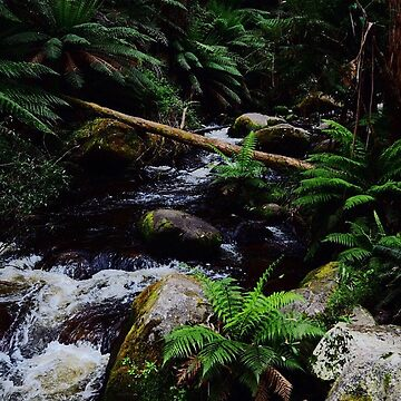 Upstream by Mollie-Taylor