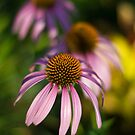 """Echinacea""  aka ""Cone Flowers"" (2) by Arthur ""Butch"" Petty"
