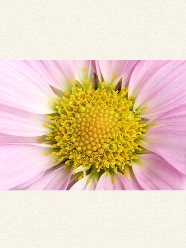 Pink Flower by christacharlene