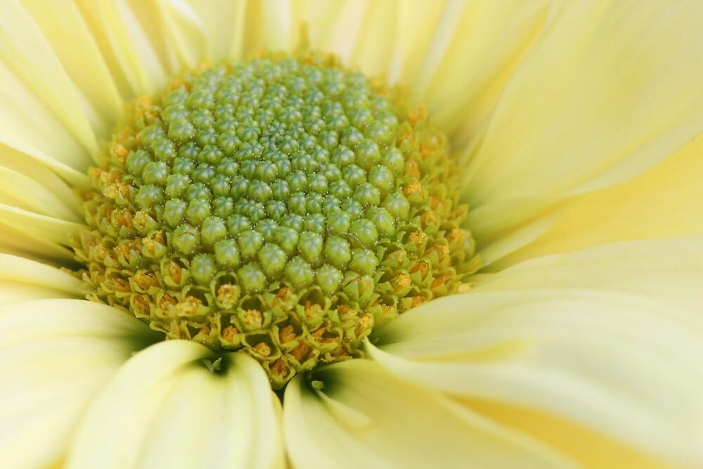 Yellow Flower by Christa Binder