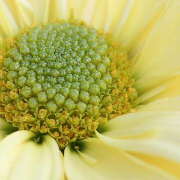 Yellow Flower by christacharlene