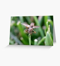 Fly On Grass Greeting Card