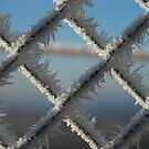 Icy Fence by Christopher Dunn