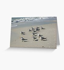 Shorebirds Greeting Card