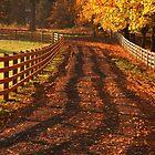 Fall Morning by Ran Richards