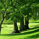 Summer Willows by Cricket Jones