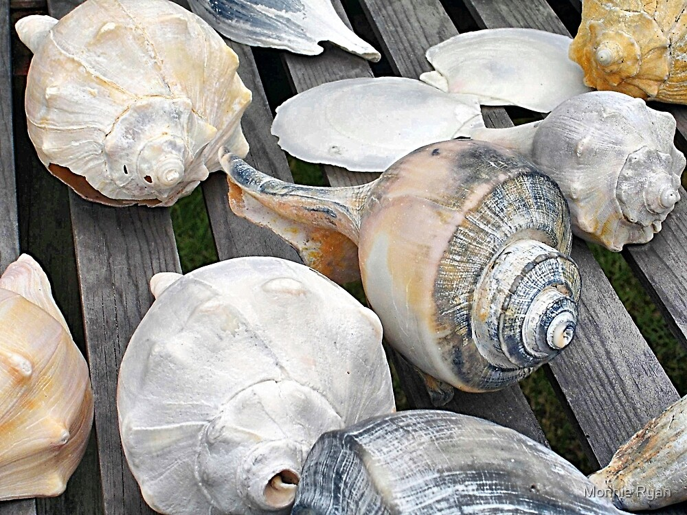 Chincoteague Shells by Monnie Ryan