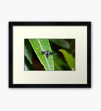 Unknown flying insect Framed Print