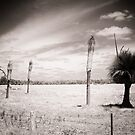 Essence of Australia sepia by adbetron
