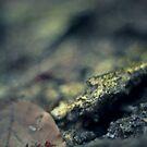 Autumness by Avantgarda