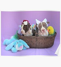 Easter Puppies Poster