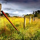 Fence Along a Rural Road by Nadya Johnson