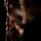 Tendrils by Larrikin  Photography