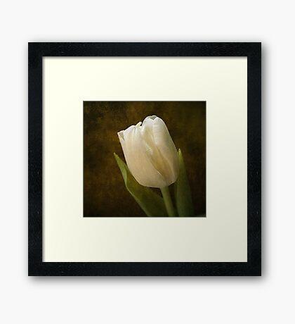 Tulip Reminiscence Framed Print