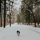 Dezember Skye von MelissaPhoto