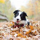 Herbst Skye von MelissaPhoto