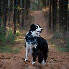 Wald Skye von MelissaPhoto