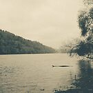 RIVER MORNING by DianaMatisz