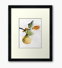 Watercolor illustration of pear Framed Print
