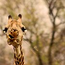 I SAID ...... DON'T TALK WITH FOOD IN YOUR MOUTH ! by Magriet Meintjes