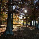 Autumn Walk by Gordon Taylor