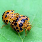 Ladybird Love by sienebrowne