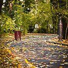 Autumn alley_01 by wildrain