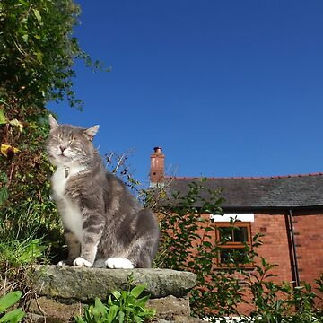 Tabby cat in cottage garden by turniptowers