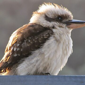 Jacko the Kookaburra by PeakeCreations