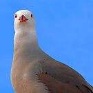 Guard bird..... by Eyal Nahmias