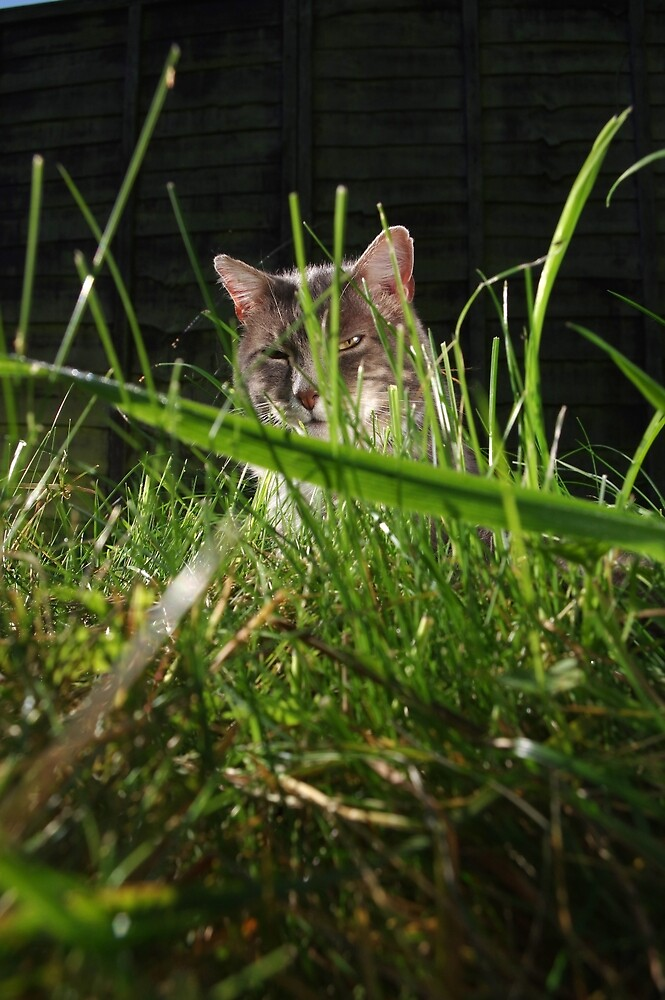 Tabby cat looking through long grass by turniptowers