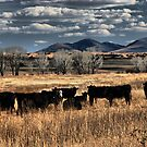 Out to Pasture by Barbara Manis