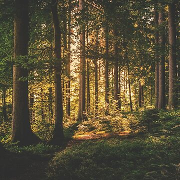 Into the Forest by PhotoStore