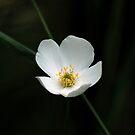 Wildflower by Brian R. Ewing