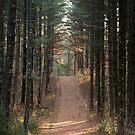 Wald Abenteuer von MelissaPhoto