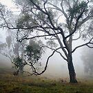 Through the Mist by NinaJoan