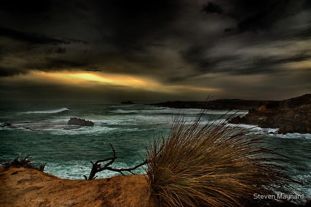 Windswept by Steven Maynard
