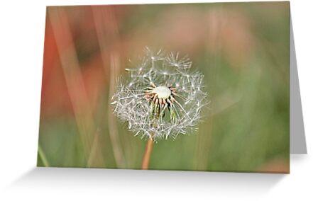 Autumn wishes by Linda Crockett