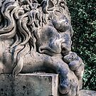 Lion Sleeps Over the Dead by Christian Sheehy