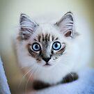 Pretty Kitty by Lori Botelho
