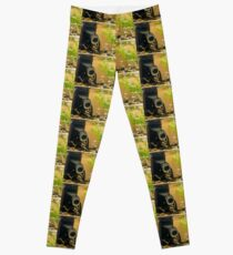 Immersion - Photography Leggings