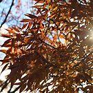 Through the Autumn Leaves by NinaJoan