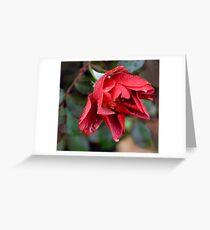 Floribunda Rose 'Cinco de Mayo' Greeting Card