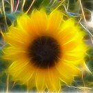 Fractalius Sunflower by Glenna Walker