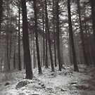 winter forest by annette andtwodogs
