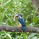 Too Big to Swallow! by kibishipaul