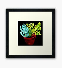Succulent Pot Framed Print