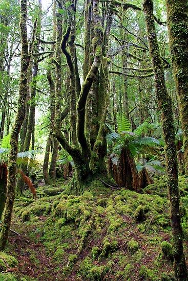 Creepy Crawley Forest - South West Tasmania by Ruth Durose