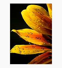 Yellow flower water droplets Photographic Print