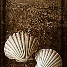 Shells by tonilouise